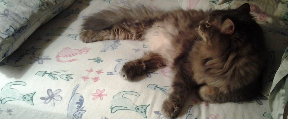 can prednisone cause vomiting in cats
